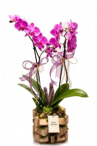 Bella Mor Orkide