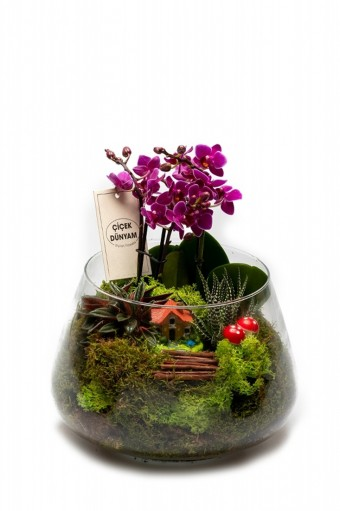Çise Mini Orkide Bahçesi