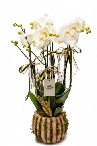 Mabella 4 Lü Orkide