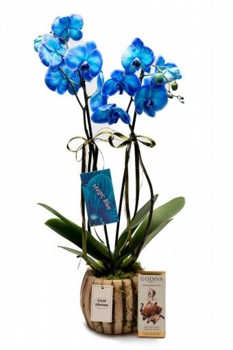 Özel Tasarım Mavi Orkide