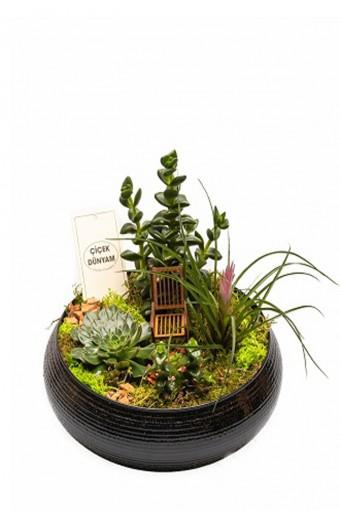 Terarium Garden